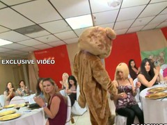 Bridal party gets nasty when the Dancing Bear arrives